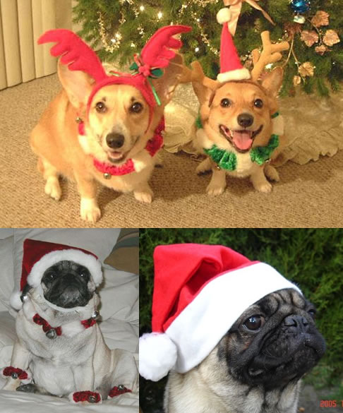 Funny Picture - Christmas Doggies