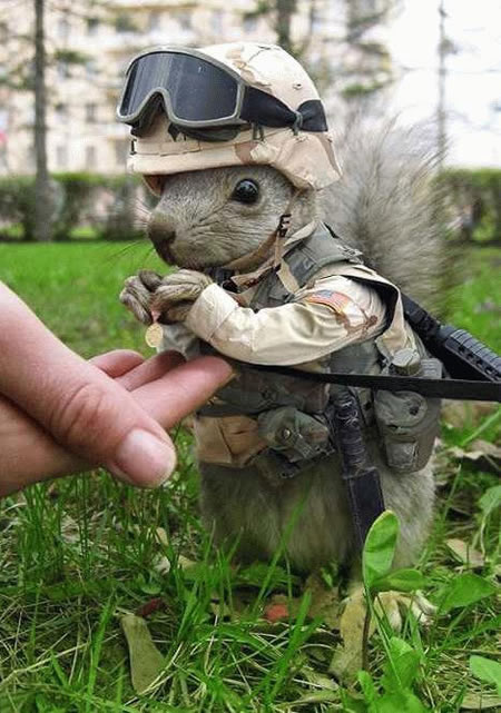 Funny Picture - Little Soldier