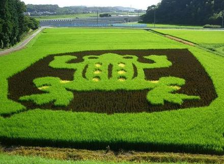 Funny Picture - Frog Field