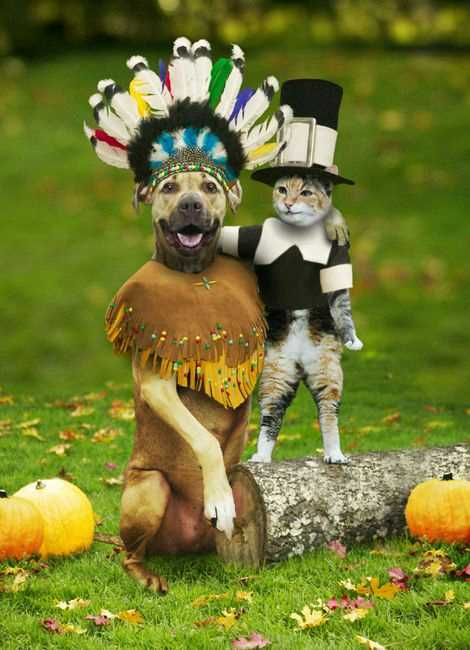 Funny Picture - Happy Thanksgiving!
