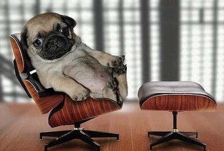 Funny Picture - Little Executive