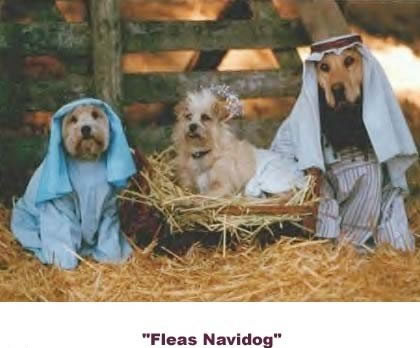 Funny Picture - Merry Christmas! - Fleas Navidog