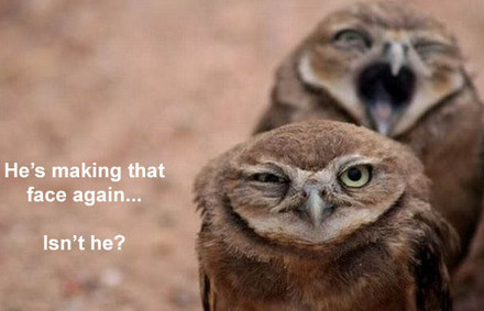 Funny Picture - Owl Humor