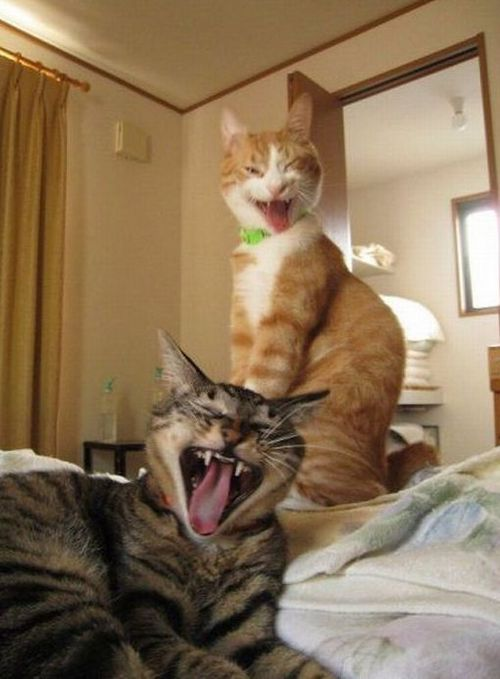Funny Picture - Demon Cats!
