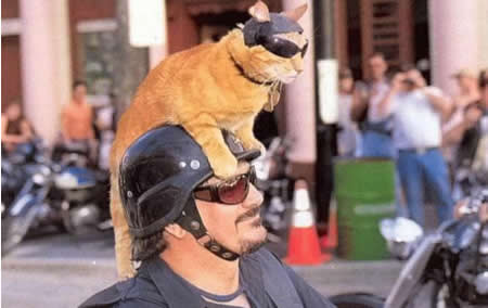 Funny Picture - Biker Kitty